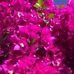 Pflanzen Fuerteventura