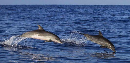 Rettungsversuch für Delfin in Puerto del Rosario