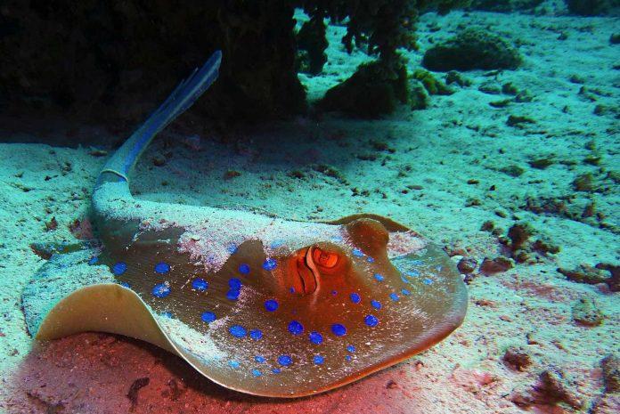 Schnorcheln auf Fuerteventura Symbolbild