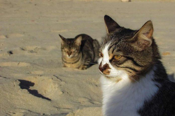 Hilfe für Katzen auf Fuerteventura