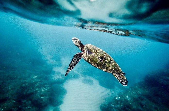Umbau der Rettungsstation für Meeresschildkröten in Morro Jable