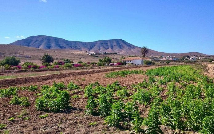 Antigua installiert Holzpaneele an allen Abfallsammelstellen der Gemeinde