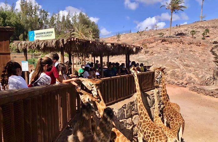 Oasis Wildlife Fuerteventura veranstaltet ökologisches Jugendprogramm - Bildquelle: Oasis Wildlife Fuerteventura
